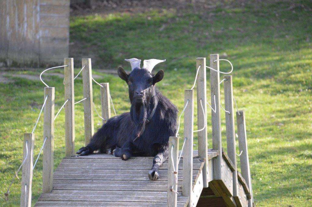 ferme avec animaux au camping 3 étoiles en Vendée