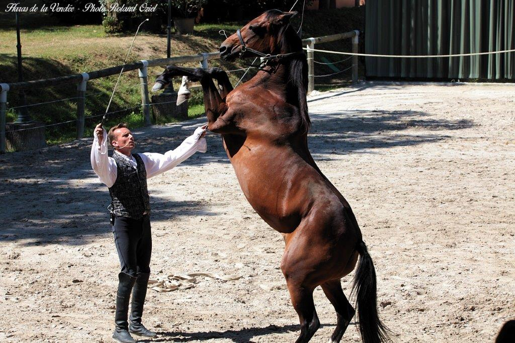 spectacle chevaux Haras