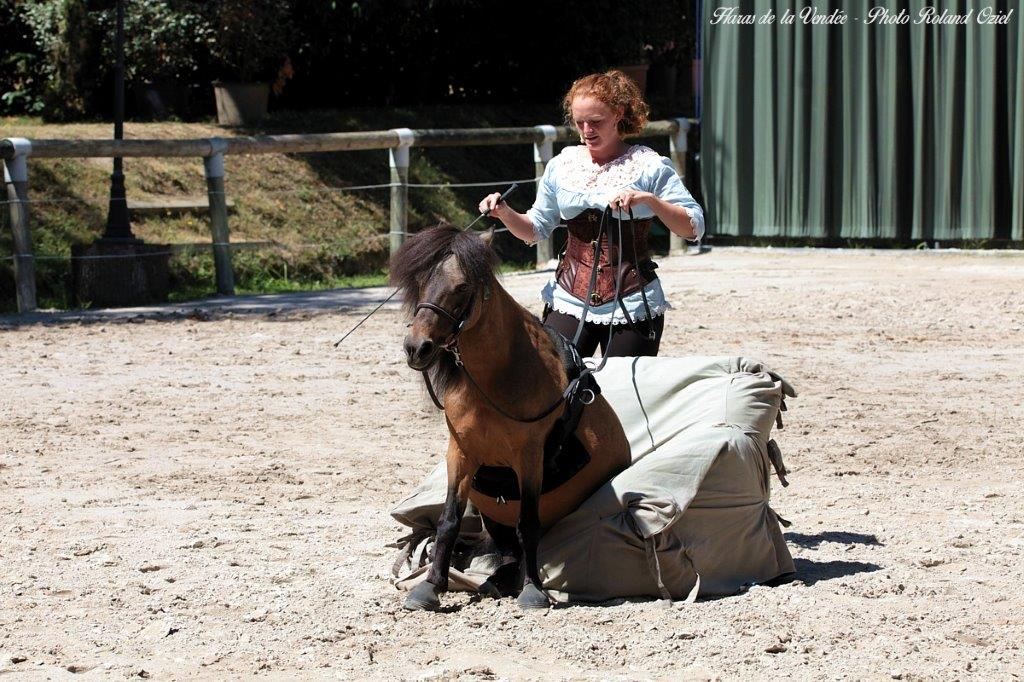 camping proche spectacle du haras