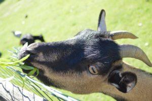 camping avec animaux en Vendée