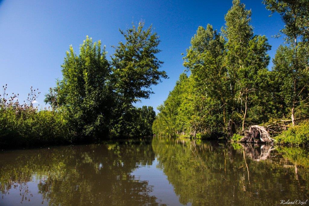 balade au coeur du Marais Poitevin proche du camping