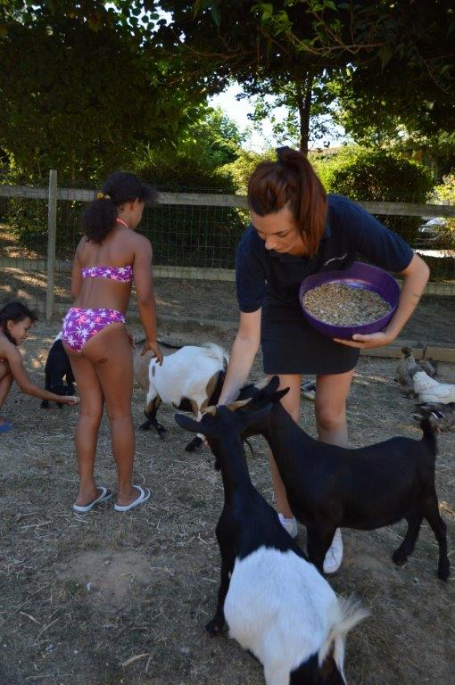 nourrissage animaux de la ferme du camping à la Roche sur Yon