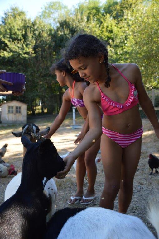 nourriture donnée au animaux du camping