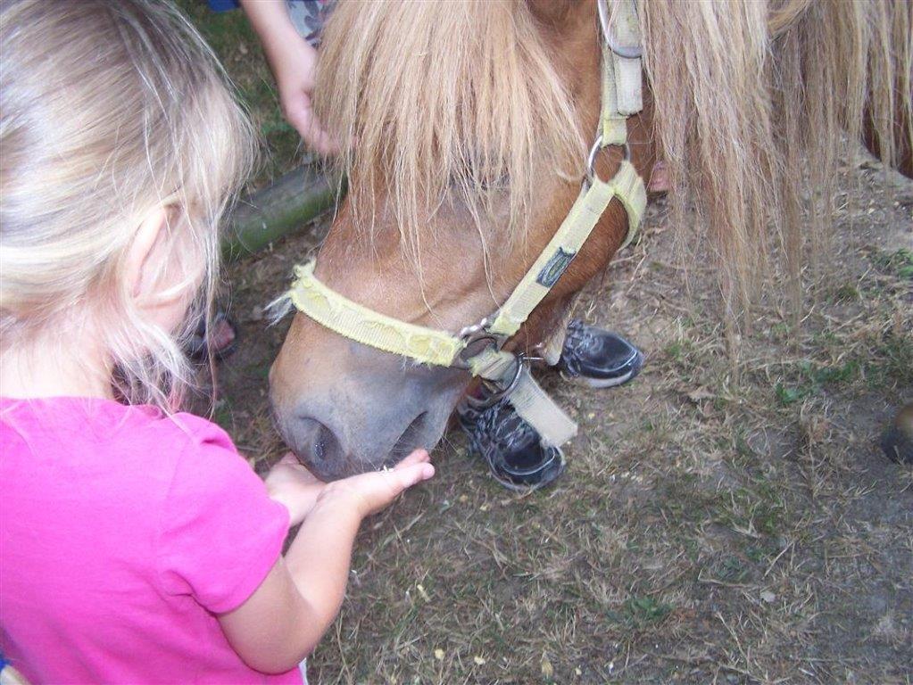 vacanciers nourrissent les animaux du camping