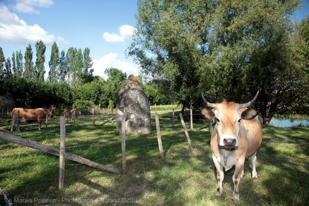 balade dans la Marais Poitevin