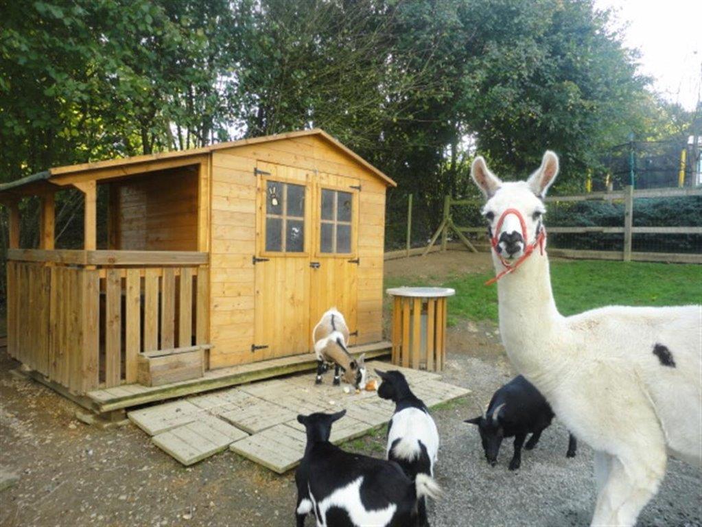 animaux de la ferme du camping